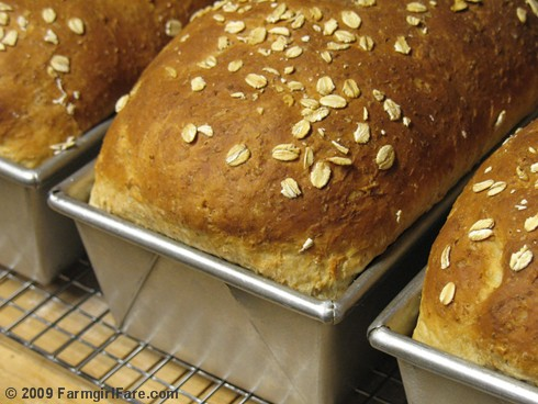 Freshly Baked Oatmeal Toasting Bread