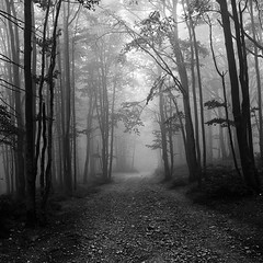 Radhost Forest - Czech Republic (Torio83) Tags: trees white mist black fog forest dark mood czechrepublic scarry radhost blackwhitephotos pentaxk20d smcda1650mmf28