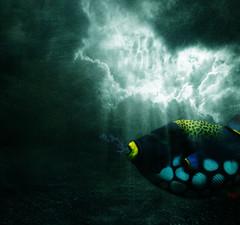 Outland (batabidd) Tags: sky fish pez clouds photoshop dark colorful artistic digitalart creative textures digitalpainting fantasy dreamy textured parrotfish rayoflight pezloro graphicmaster batabidd