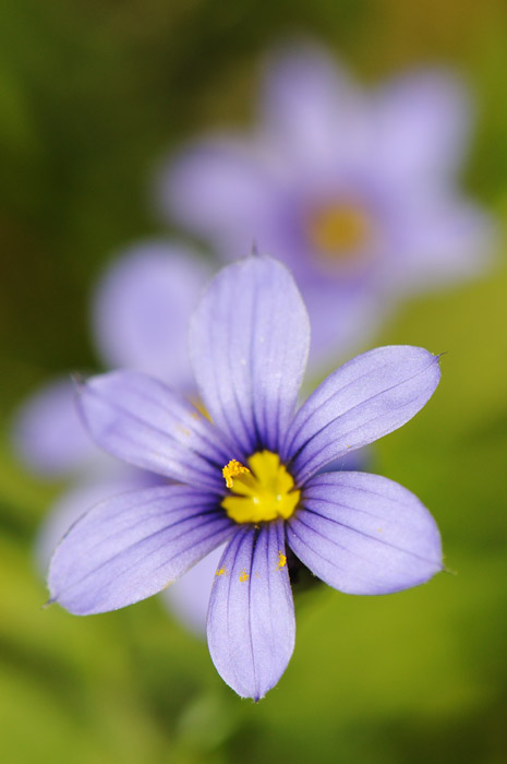 web_violetfacingvertical_wildflowers_2604