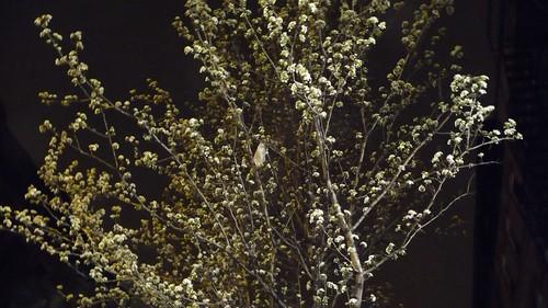 No flash. Spring blooms.