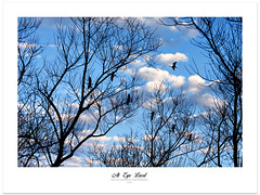 At Eye Level (Imapix) Tags: canada tree bird clouds geese spring bluesky goose nuages arbre oiseau canadageese bernache outardes