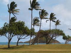 P4021240 (ymeng00) Tags: beach hawaii oahu kualoaregionalpark