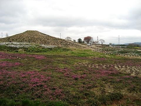 芝桜の名所 花夢の里 ロクタン14