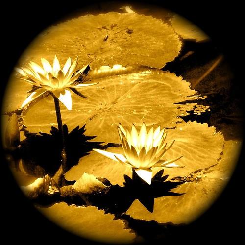 brillant dans la nuit foncée