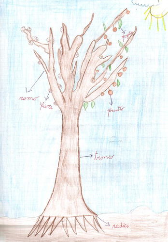 albero disegnato alla primaria
