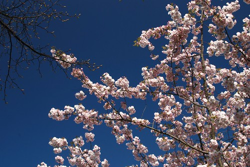 Spring in London, Regent's Park