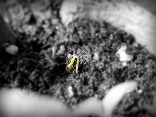 seeds3_042310