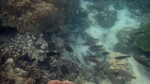 Koh Phangan snorkeling @ salad beach (2)
