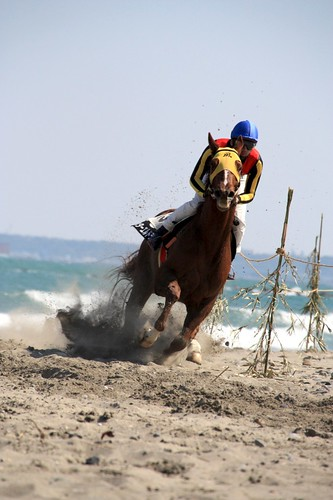 相良草競馬大会-Local horse race in Sagara