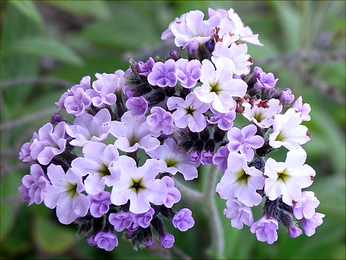 Macro Flower 13/13