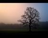 unique (D.Reichardt) Tags: morning friends tree nature fog forest germany landscape europe stubben abigfave flickrdiamond dreichardt ubej