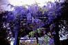 Wish You Were Here (moaan) Tags: life flower color digital spring flora purple violet vine tint trellis lilac utata bloom flowering hue wisteria 2010 blooming wisteriatrellis 四国 21mm lightpurple 高知 infullbloom superangulon rd1s 足摺岬 inlife f34 epsonrd1s r321 leicasuperangulon21mmf34 darklilac 足摺サニーロード gettyimagesjapanq1 gettyimagesjapanq2