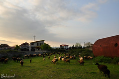Dream Land         (Behzad No) Tags: life city green sheep iran north dream land nour   nikond90  behzadno