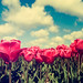 I Heart Holland by Allard One