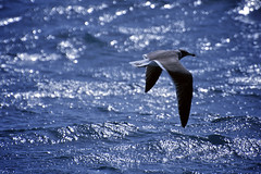 Time to Think (Motaz Kattan) Tags: blue red sea wild bird nature water animal bay nikon key zoom seagull low saudi arabia jeddah lowkey mealtime salman d5000