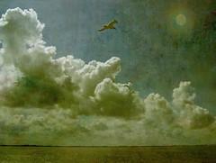 White Bird (KalterFisch) Tags: sea summer birds landscape digiart platinumheartaward arttex