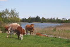 earith_district_002 (Peter-Williams) Tags: uk lake cambridgeshire waterland earith huntingdonshire