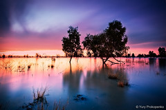 Australia :: Outback :: Lake Pamamaroo (-yury-) Tags: sunset tree water night lakes australia nsw outback brokenhill darlingriver menindee pamamaroo