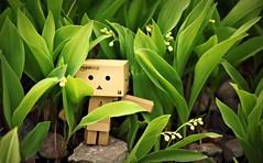 (3faeries) Tags: edinburgh botanicgarden danbo amazoncojp danboard 3faeriescom