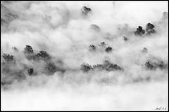Amagats (Jordi A.S.) Tags: nature nikon natura catalonia arbres catalunya jordi mont muntanya 2010 blancinegre paisatge nvols d300 boira muntanyes espectacular enfoca cabrers nikond300 sortidazz provinciadegirona nikonistescatalansicatalanes jordias jordi21