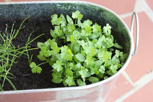 herbs05