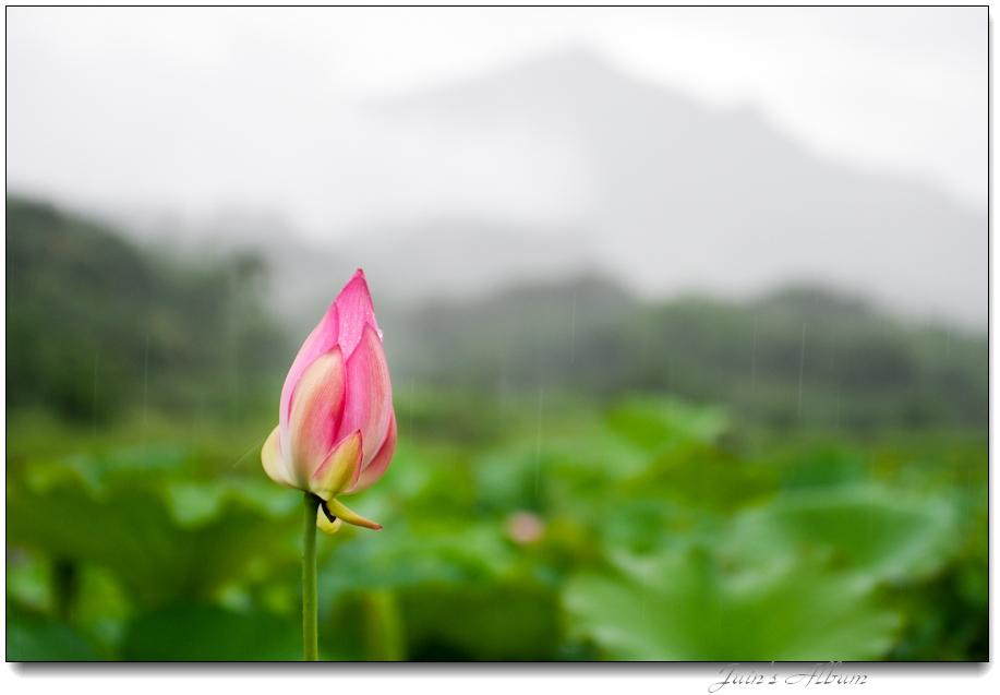 5/23 荷 苦 阿 (農改場)