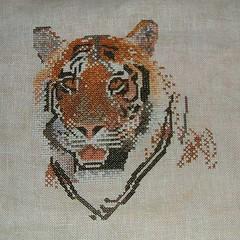 W.i.p. Tiger - 23/05/10