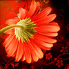 Exotica (Laura Galley) Tags: red stilllife flower art texture fleur rouge flora bright exotic oriental legacy textured redandblack oa cubism itg vividcolor theworldwelivein soulscapes artdigital specialpicture multimegashot dragondaggerphoto artistictreasurechest heavenlycaptures flowerquest vipveryimportantphotos qualitysurroundings redmatrix daarklands magicunicornverybest selectbestfavorites selectbestexcellence magicunicornmasterpiece sailsevenseas galleryofdreams trolledproud newgoldenseal lauragalley goldsealings sbfmasterpiece fleursetpaysages lgphotoart heavensshots untouchabledream specialthankstojoessistahandpareericaforsharingtheirbeautifultextures