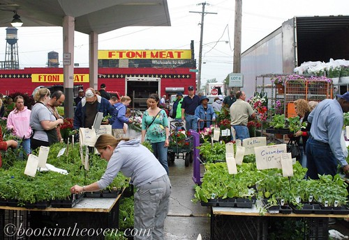 Food Plants for Sale