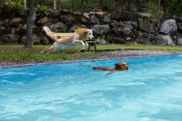 生活就是泳池12