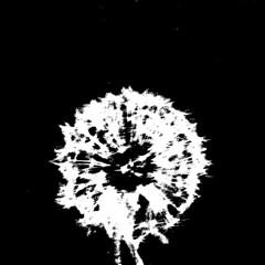 blowball (DREASAN) Tags: white black inversion pusteblume blowball dreasan extremecontrast