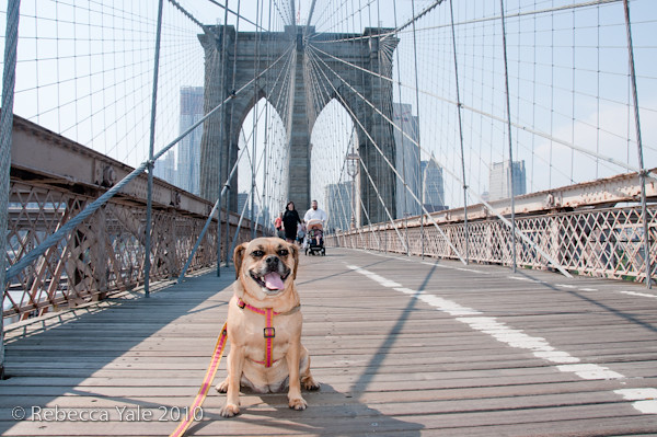 RYALE_Brooklyn_Bridge-14