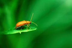 Bug (Shahriar Xplores...) Tags: red color macro green canon bug dof image action award best ladybug dhaka usm 60mm moment sell bangladesh f28 active gettyimages t2 greenish 550 coments aisa bugmacro canon60mm 550d kiss4 t2i canon550d canoneos550d rebelt2i canonrebelt2i 550dmacro 550dbest canonaction canonmacrobest requesttolicense best550d framebangladesh shahriarphotography