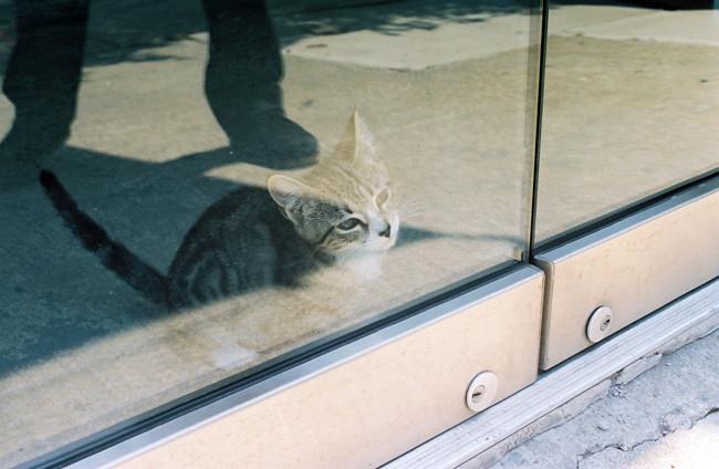surprise kitten