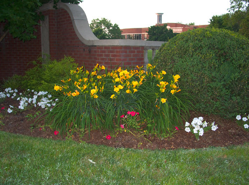 Planting Bed on the Belmont Blvd. Side of Lipscomb University