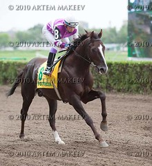IMG_7520 (White Bear) Tags: horses track russia russian equestrian artem        makeev   thoroughbreed      equineracesrace