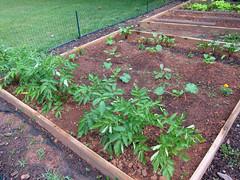 garden late spring