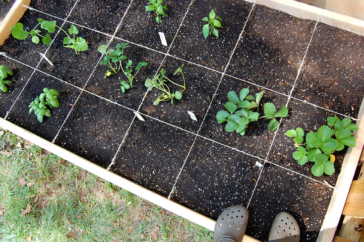The garden on May 6 - just planted