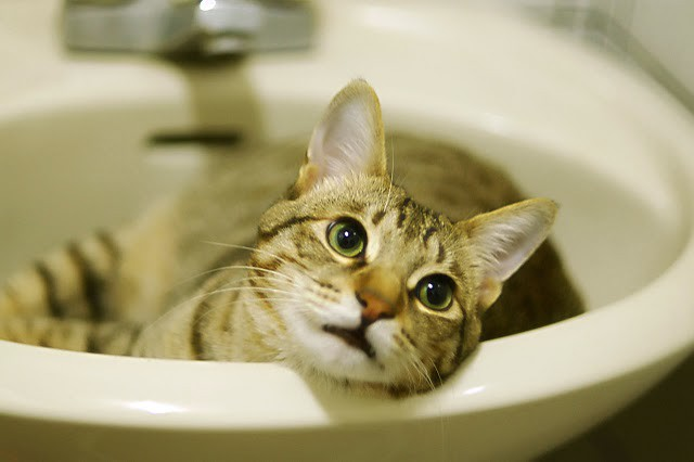 cute tabby cat in the sink pic