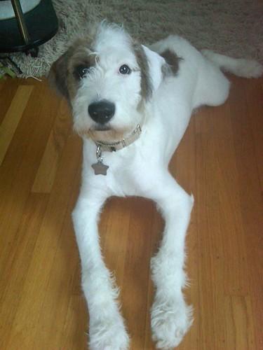 Frankie, best dog ever!