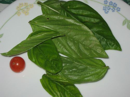 basil with a cherry