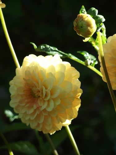 fiori giugno 014