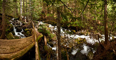 Stream Stitch (absencesix) Tags: trees panorama plants usa nature washington stream unitedstates iso400 events may noflash treetrunk evergreens northamerica 1020mm 16mm pinetrees hikes locations 2010 locale verticalstitch canon30d mountbakersnoqualmienationalforest canoneos30d mtbakersnoqualmienationalforest laketalapustrail camera:make=canon geo:state=washington exif:make=canon exif:iso_speed=400 apertureprioritymode hasmetastyletag hascameratype naturallocale selfrating4stars exif:focal_length=16mm 130secatf63 may152010 geo:countrys=usa exif:lens=100200mm exif:model=canoneos30d camera:model=canoneos30d exif:aperture=ƒ63 laketalapus05152010 subjectdistanceunknown geo:lon=12151326228816 geo:lat=47409244209389 geo:city=mountbakersnoqualmienationalforest mountbakersnoqualmienationalforestwashingtonusa 47°2433n121°3048w