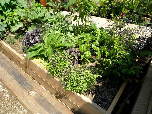 Sub-irrigated Raised Beds & Boxes
