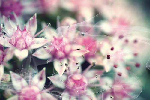 Experi-[Mental] Flowers