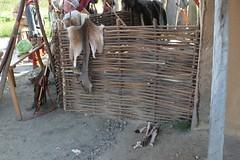 Jagdbeute Reh in Haithabu Wikinger Museum WHH 25-09-2010