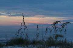 Family_Alligator Point_9945 (dougflyer) Tags: familybeach