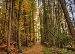 Autumn Colours (MarkE_T) Tags: autumn trees wales forrest pentax path k10d pentaxk10d swissvalleyreservoir