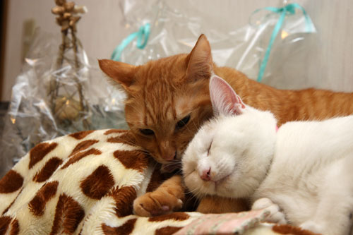 cute cats cuddling